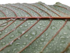 Tea Time Botanicals Vendor Review